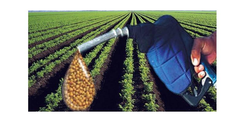 Biodiésel: OMC falló a favor de la Argentina por aranceles de la UE
